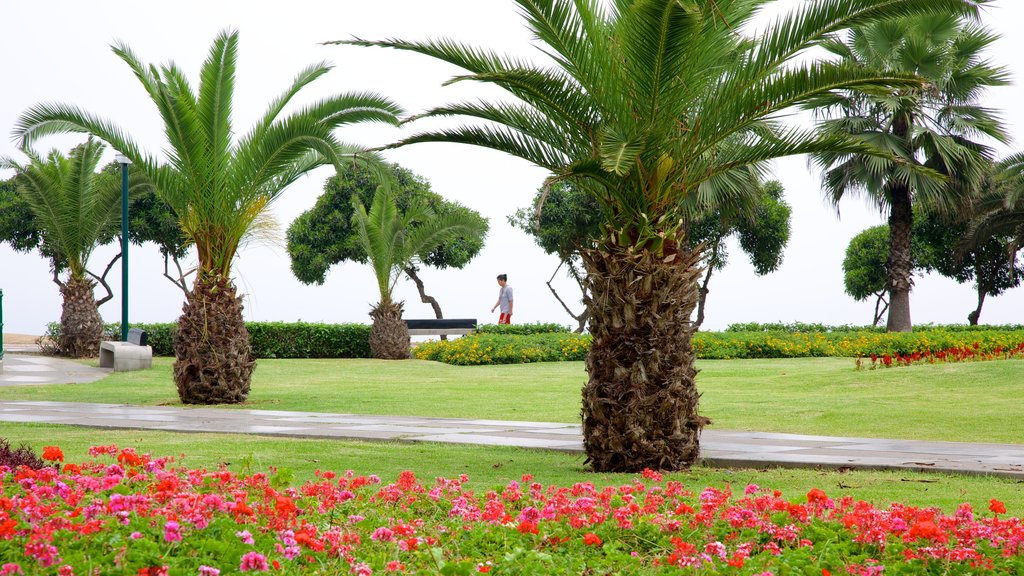 Lima which includes flowers, a garden and tropical scenes