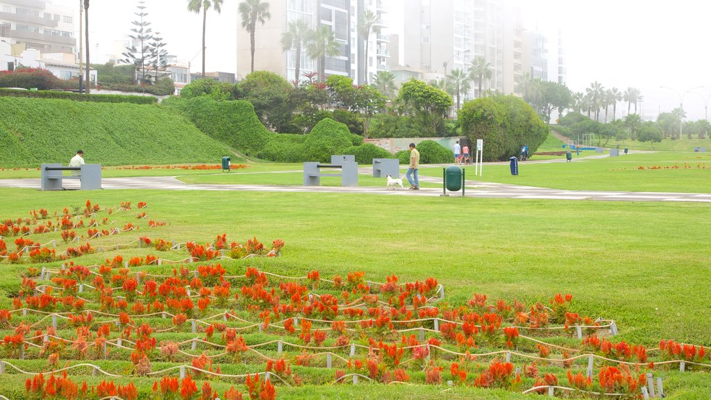 Lima showing a park and flowers
