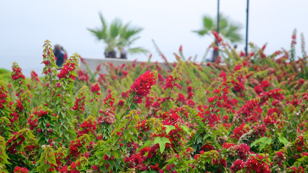 Lima showing flowers and wildflowers