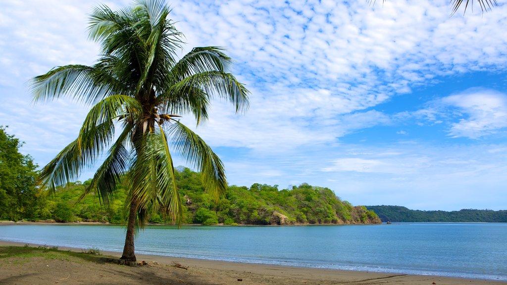 Playa Panamá mostrando escenas tropicales y una playa de arena
