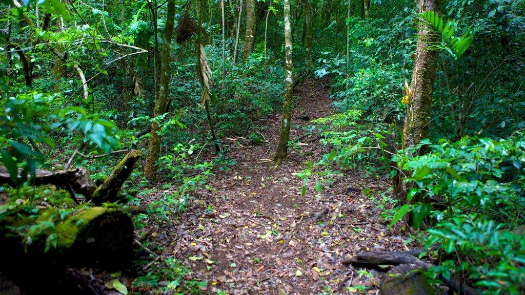 Parque Nacional Rincón de la Vieja que incluye escenas forestales y selva