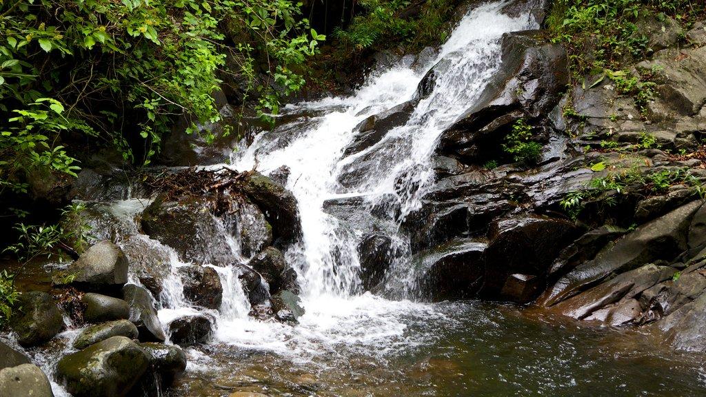 Parque Nacional Rincón de la Vieja ofreciendo rápidos y una catarata