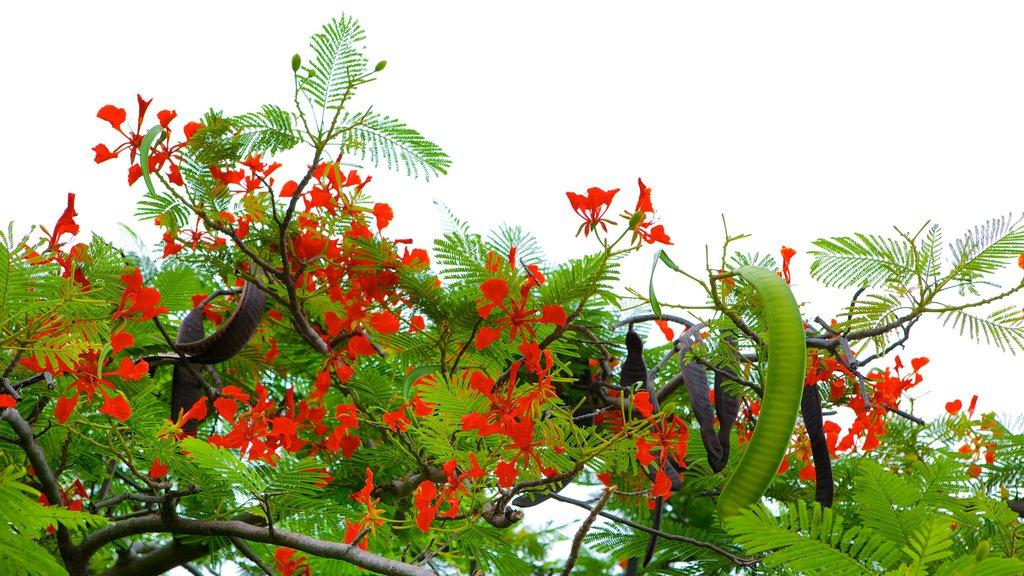 El Ocotal ofreciendo flores silvestres y flores