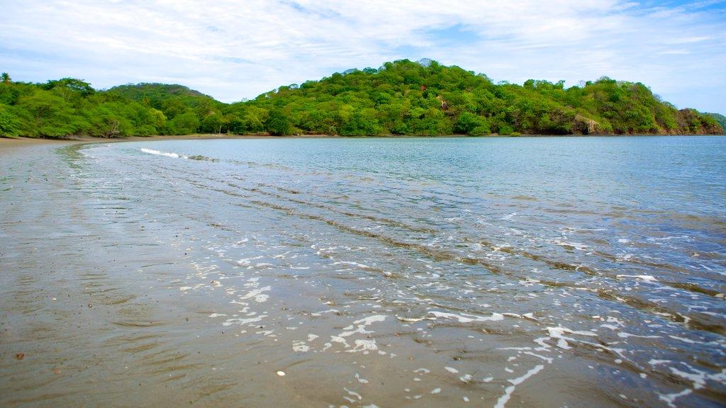 Panama Beach featuring a sandy beach
