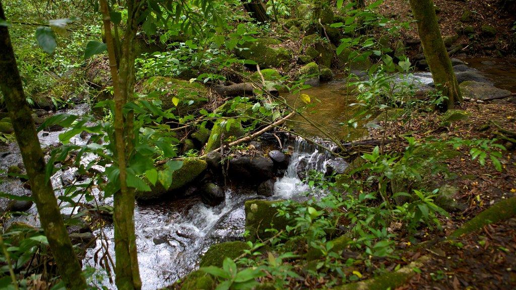 Rincon de la Vieja National Park showing forests, rainforest and a river or creek