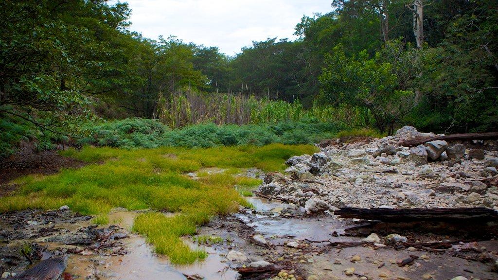 Rincon de la Vieja National Park featuring tranquil scenes