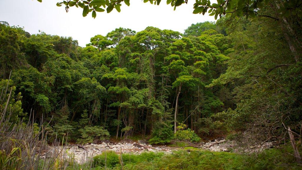 Rincon de la Vieja National Park showing forest scenes