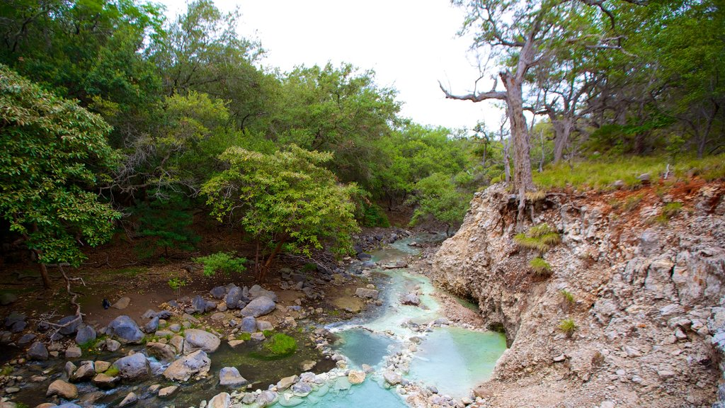 Rincon de la Vieja National Park showing a river or creek and forests