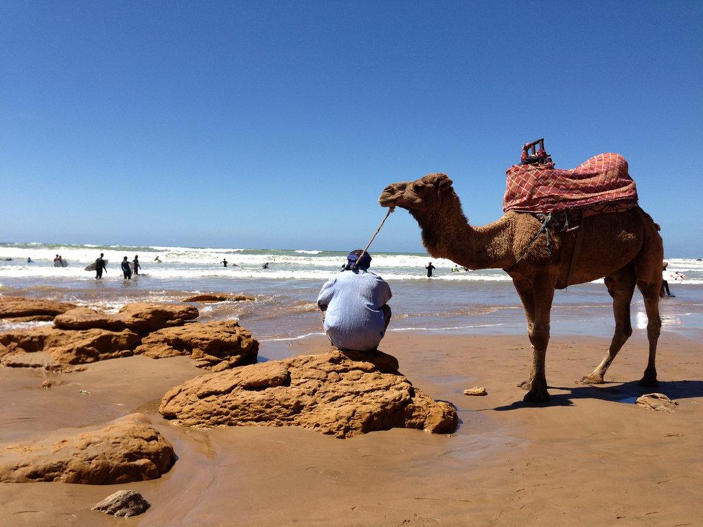 Camel on Panorama Beach