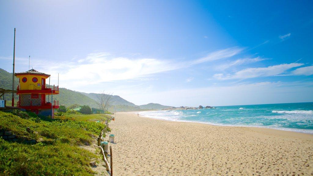 Mole Beach which includes a sandy beach