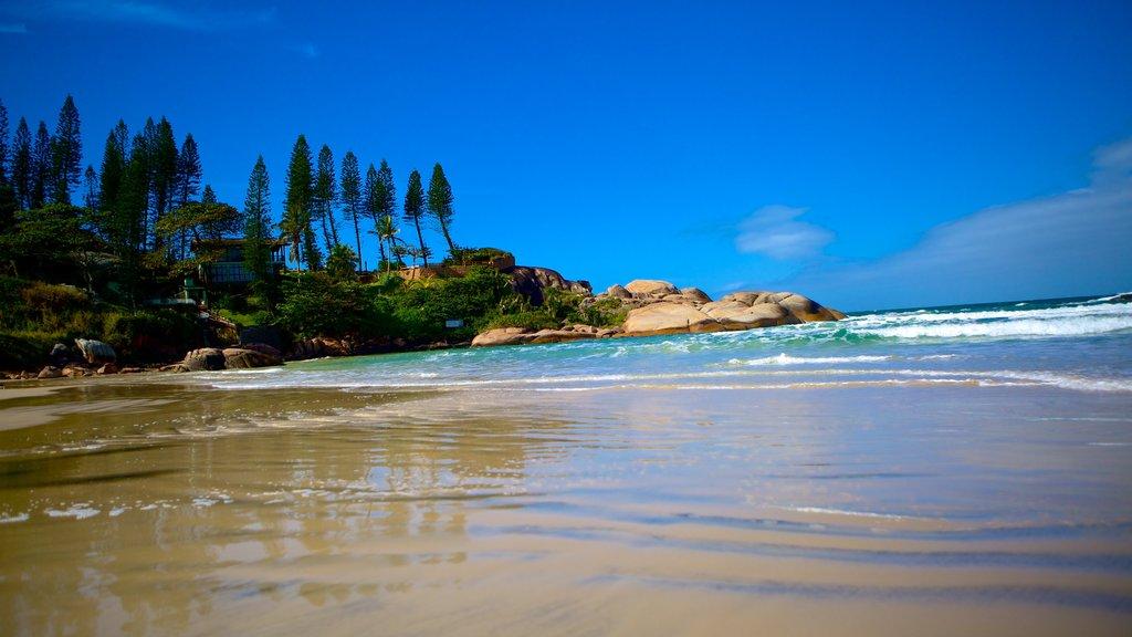 Joaquina Beach which includes a beach