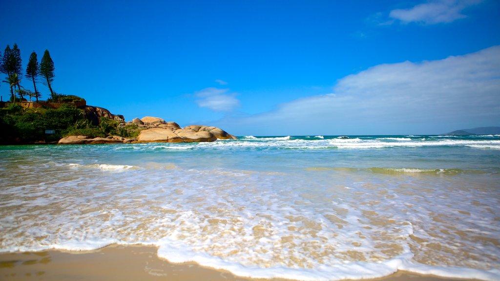 Joaquina Beach showing a sandy beach