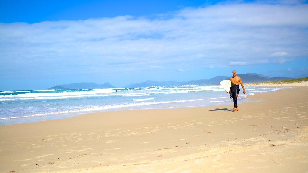 Joaquina Beach featuring surfing and a sandy beach as well as an individual male