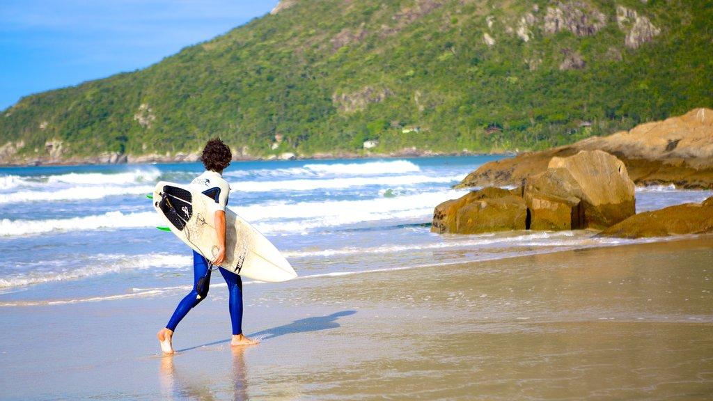 Matadeiro Beach showing a beach and surfing as well as an individual male