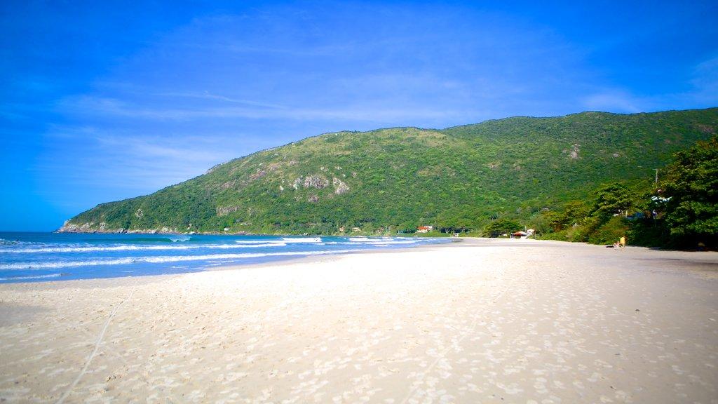 Matadeiro Beach featuring a sandy beach and landscape views