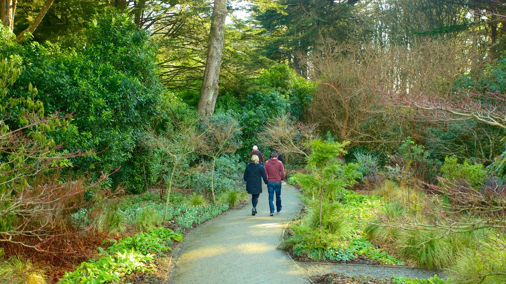 Larnach Castle showing forest scenes, hiking or walking and a garden