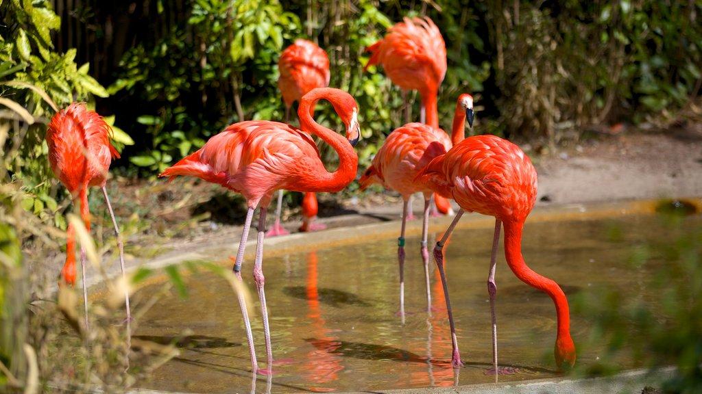 Salisbury Zoo featuring zoo animals and bird life