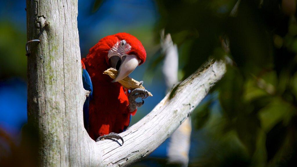 Salisbury Zoo which includes bird life and zoo animals