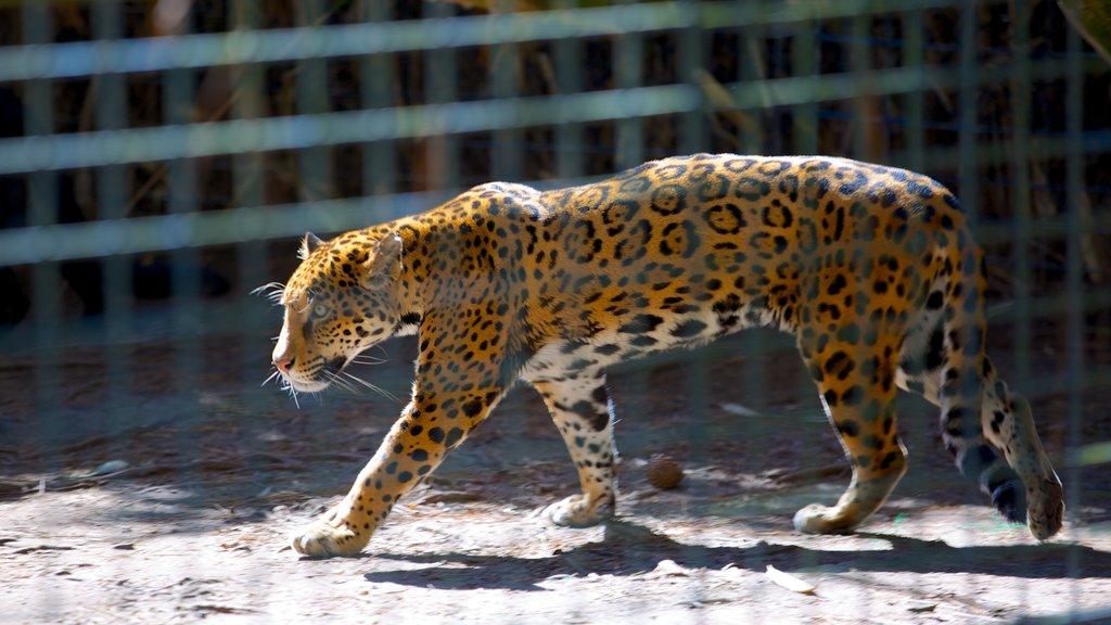 Salisbury Zoo showing zoo animals and dangerous animals