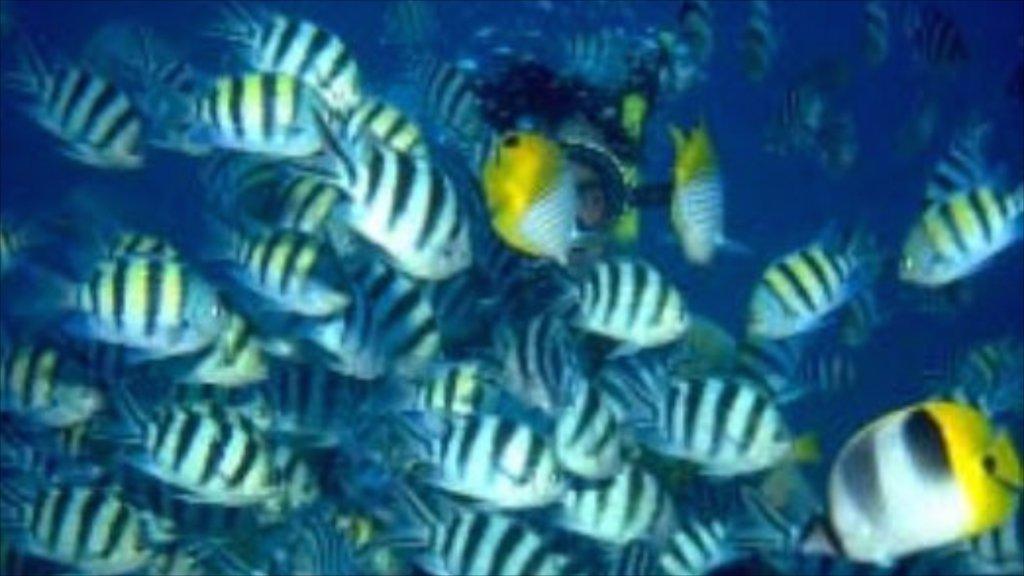 Saipan featuring marine life