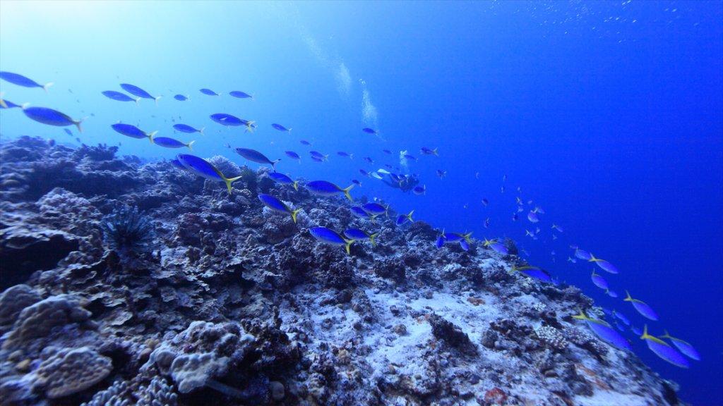 Saipan featuring marine life, scuba diving and coral