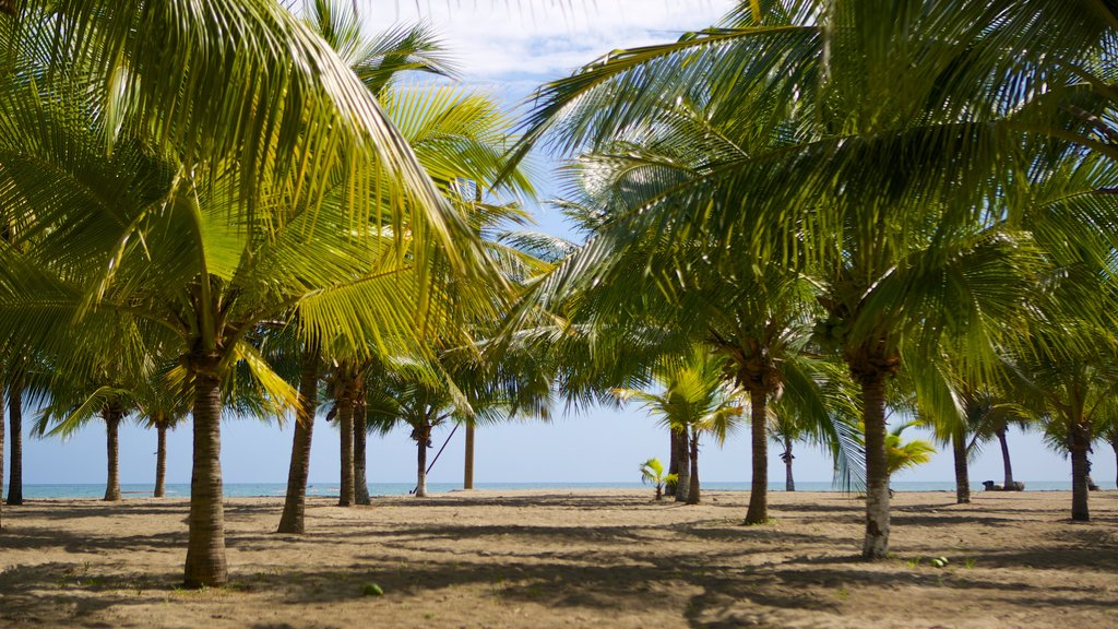 Tela featuring tropical scenes and a beach