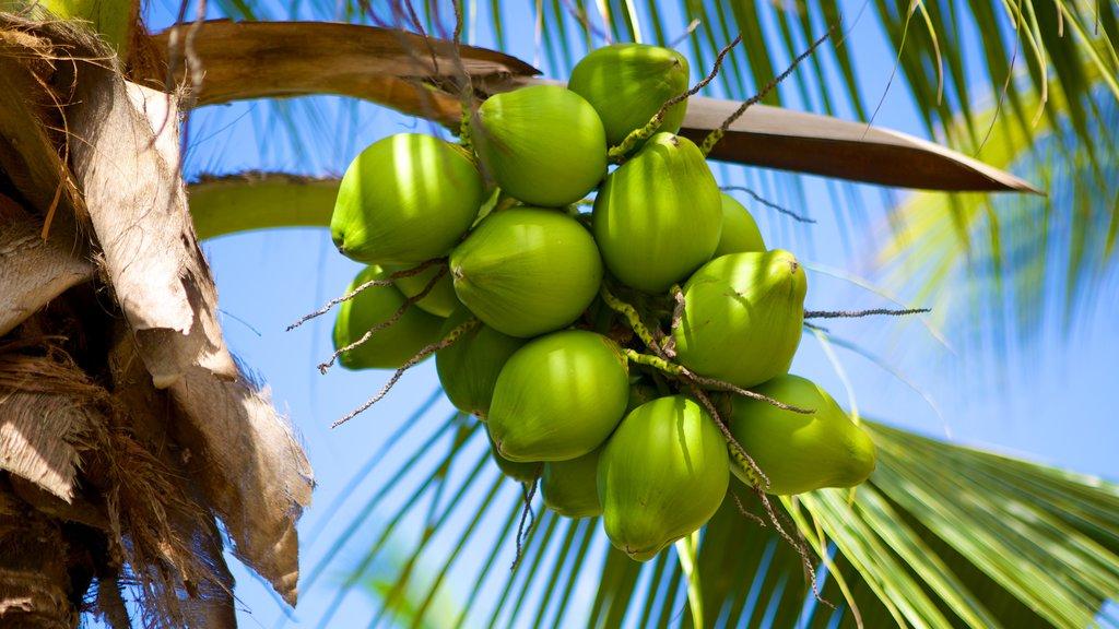 Tela showing tropical scenes