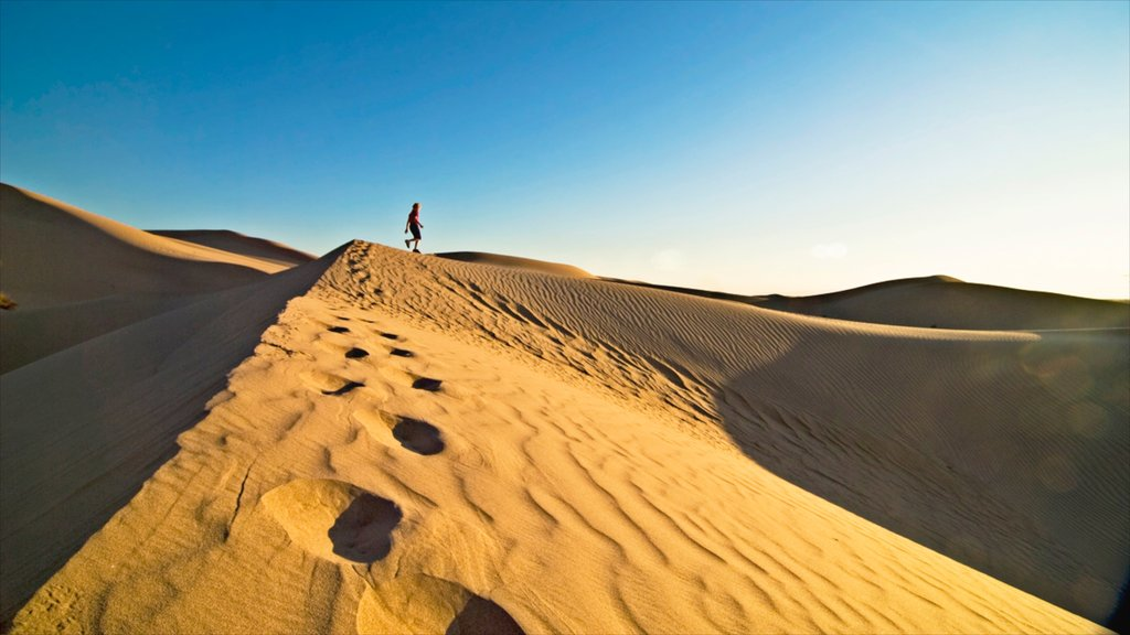 Yuma featuring desert views, hiking or walking and landscape views