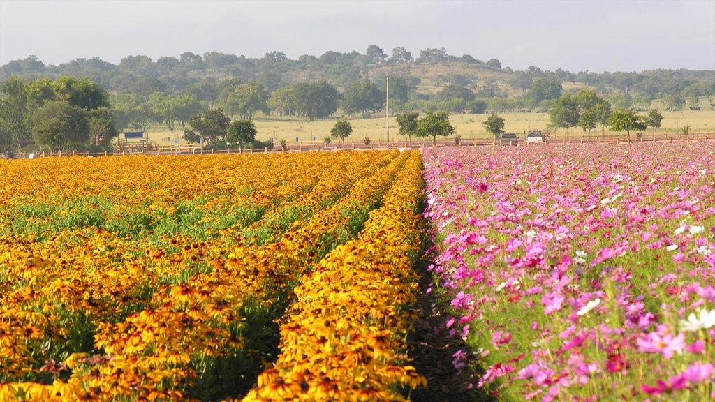 Fredericksburg que incluye flores, flores silvestres y vistas de paisajes