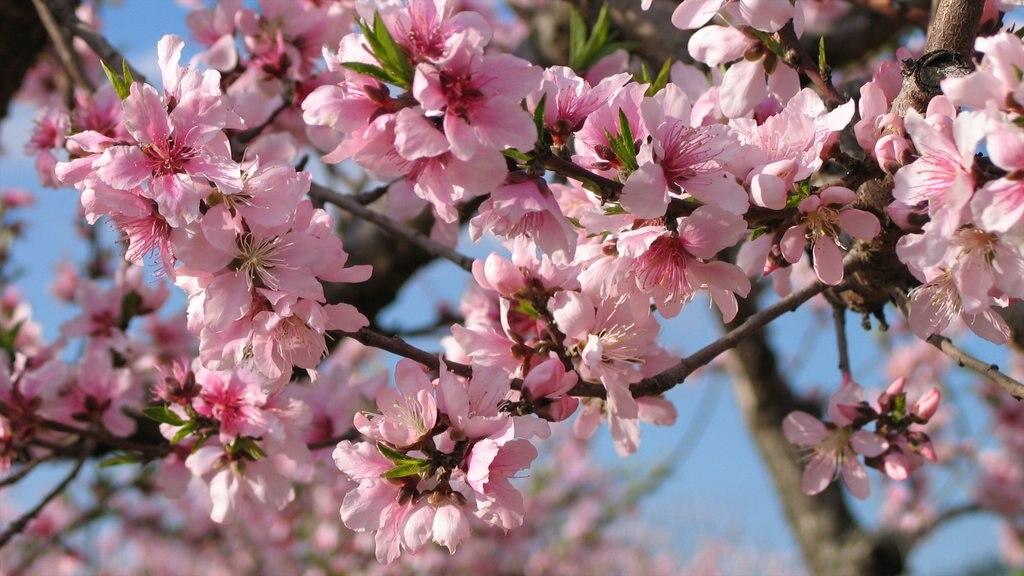 Fredericksburg featuring flowers