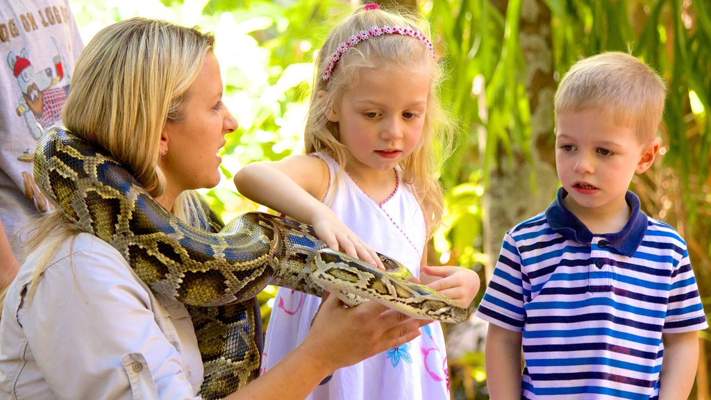 Australia Zoo which includes zoo animals and dangerous animals as well as children