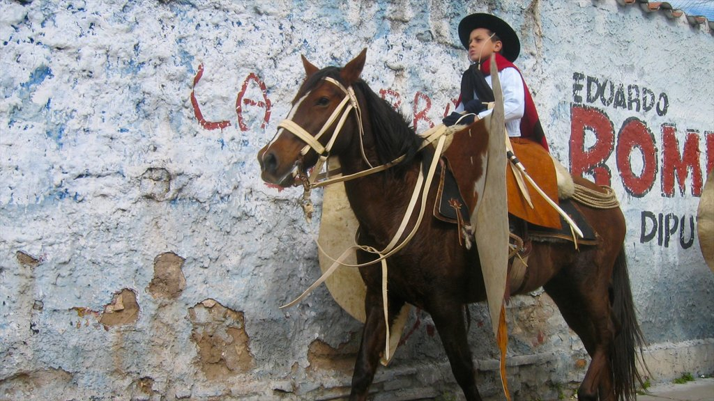 Salta featuring land animals and horseriding as well as an individual child