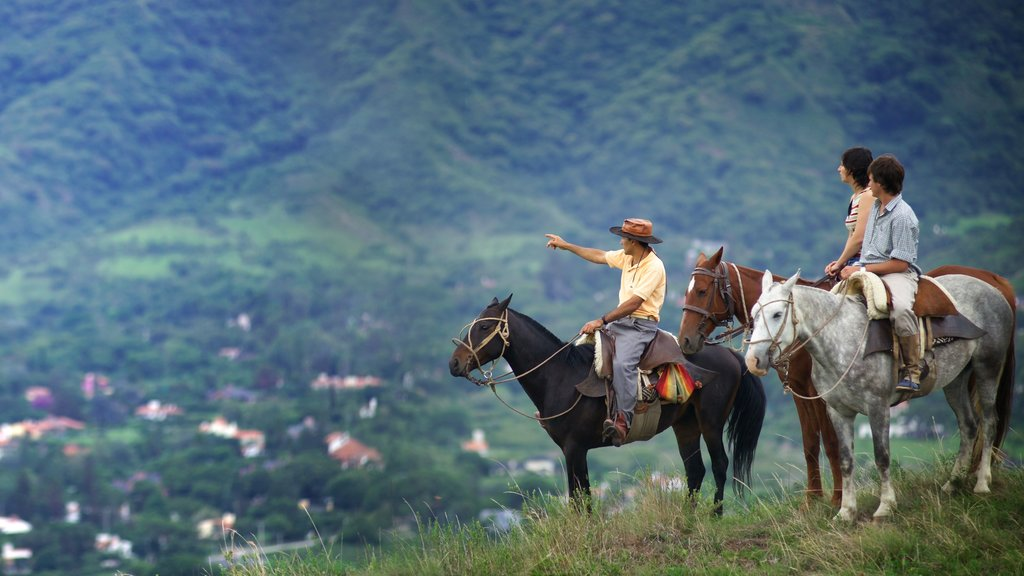 Salta featuring land animals and horseriding as well as a small group of people