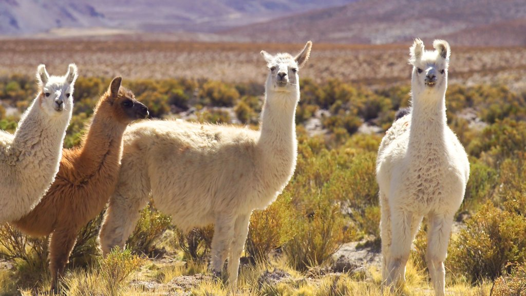 Salta featuring tranquil scenes and land animals