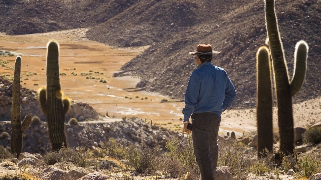 Salta featuring hiking or walking, tranquil scenes and desert views