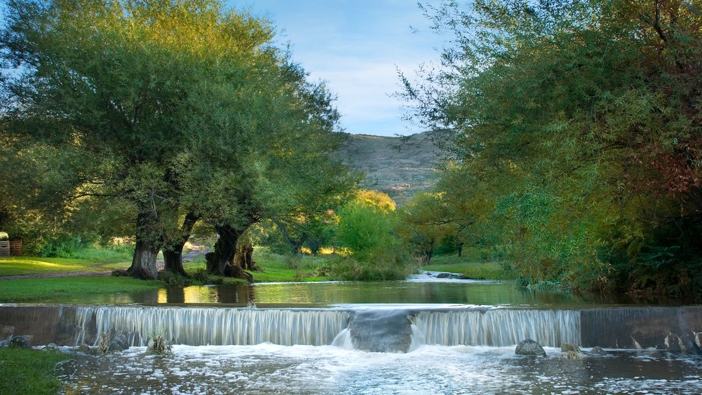 Cordoba showing a river or creek