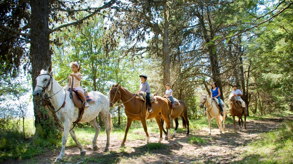 Cordoba which includes land animals and horseriding as well as a large group of people