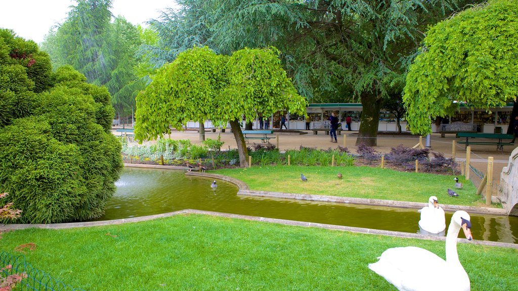 Alameda Park which includes bird life, a pond and a garden