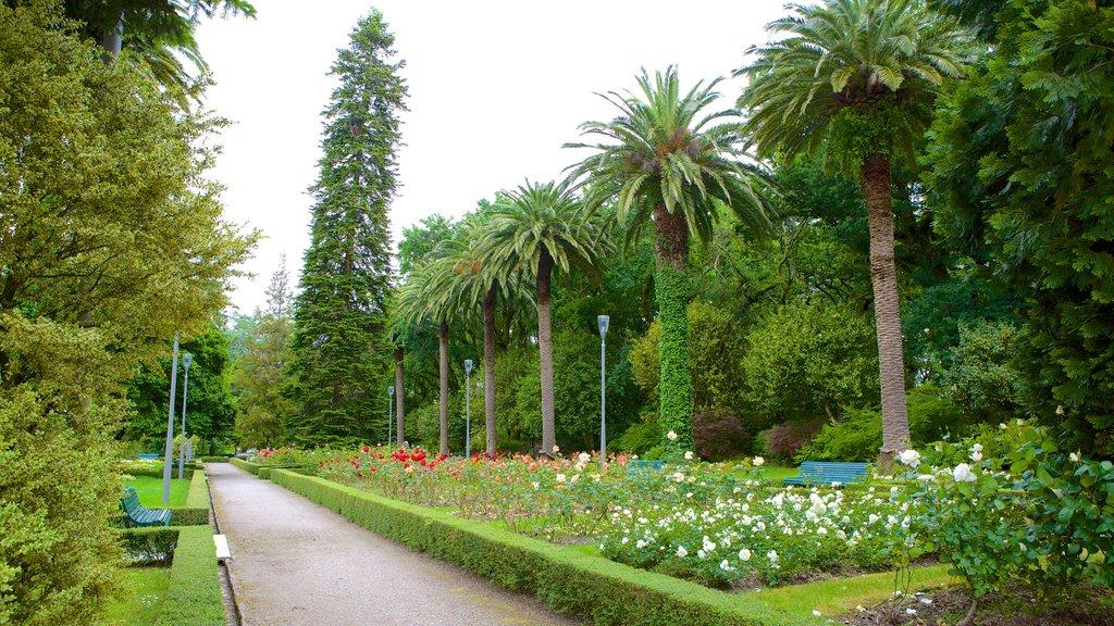 Alameda Park showing a garden