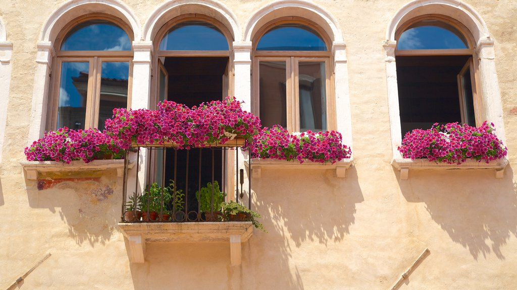 Piazza Ferretto which includes wildflowers, a house and flowers