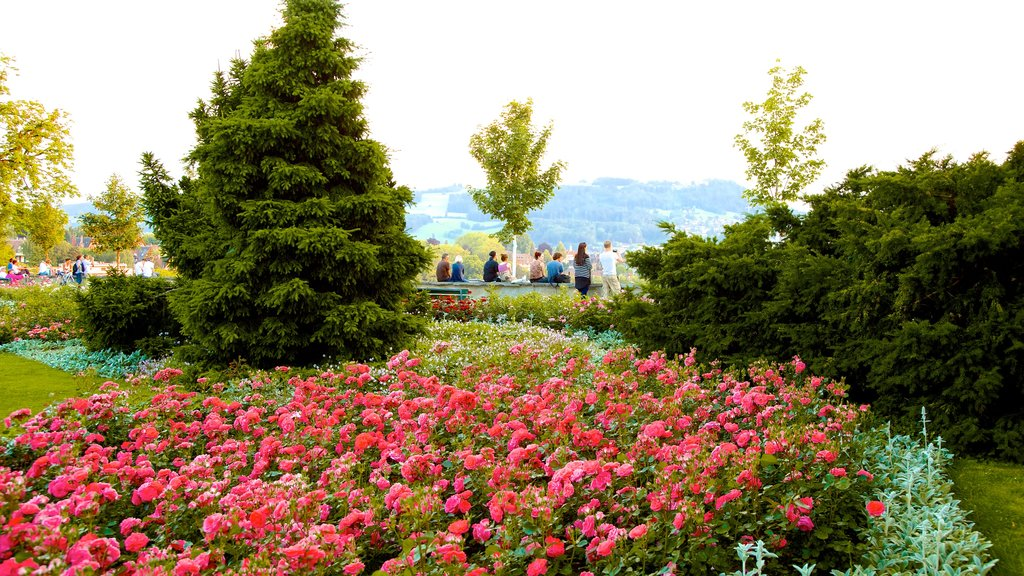 Bern Rose Garden which includes a park, flowers and wildflowers