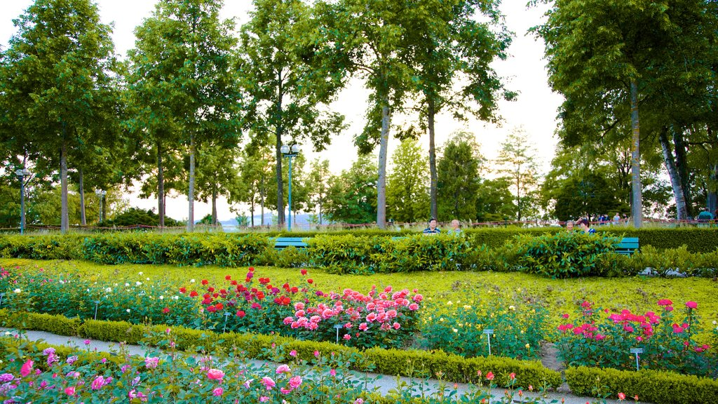 Bern Rose Garden showing wildflowers, a park and flowers