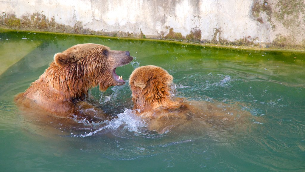 Bear Pits featuring zoo animals and dangerous animals