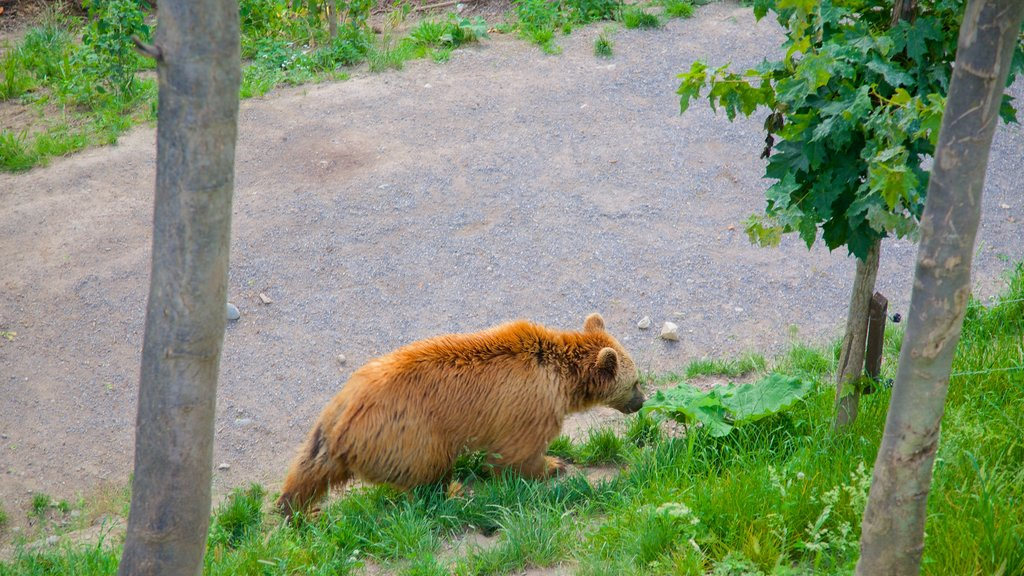 Bear Pits showing zoo animals and dangerous animals