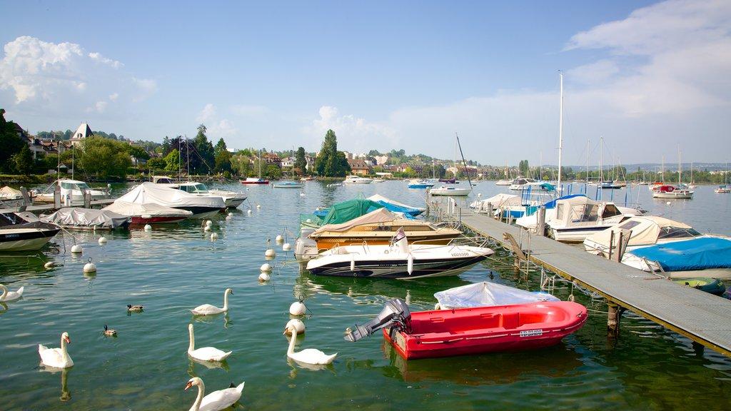 Morges mostrando un lago o abrevadero, una bahía o puerto y vida de las aves