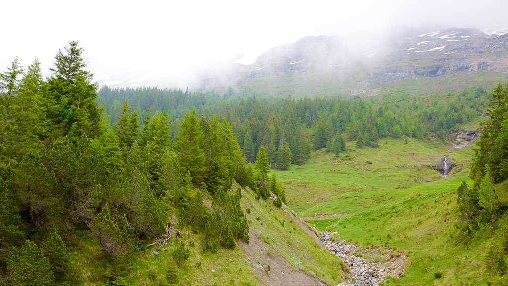 Grindelwald which includes landscape views, mist or fog and forests