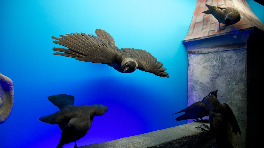 Geneva Museum of Natural History featuring interior views and bird life