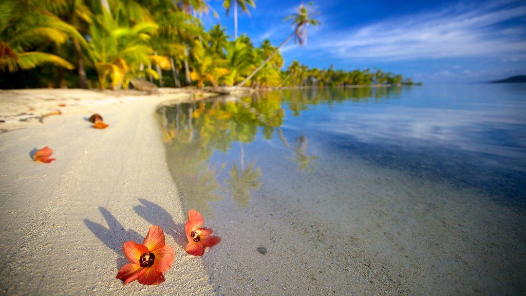 Tahiti showing a sandy beach and flowers