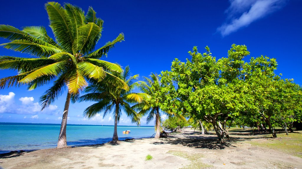 Marae Taputapuatea mostrando una playa de arena y escenas tropicales