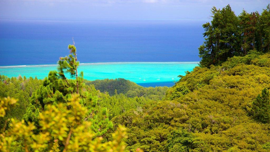 Tahití que incluye vistas generales de la costa
